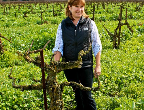 "Why Lodi's Bechthold Cinsault may be the ""future"" of wine"