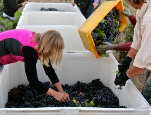 Harvest 2014 Report
