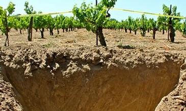 cinsault-pit-soils